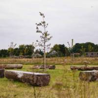 First natural cemetery in Flanders: no tombstones and biodegradable coffins